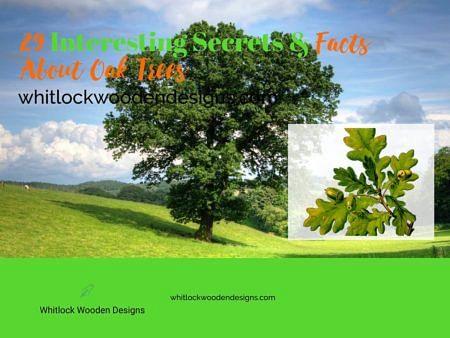29 Interesting Secrets & Facts About Oak Trees
